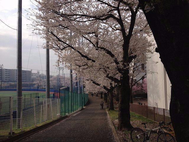 2013年3月28日(木曜日) 今日は、国学院の桜を撮内りました。
