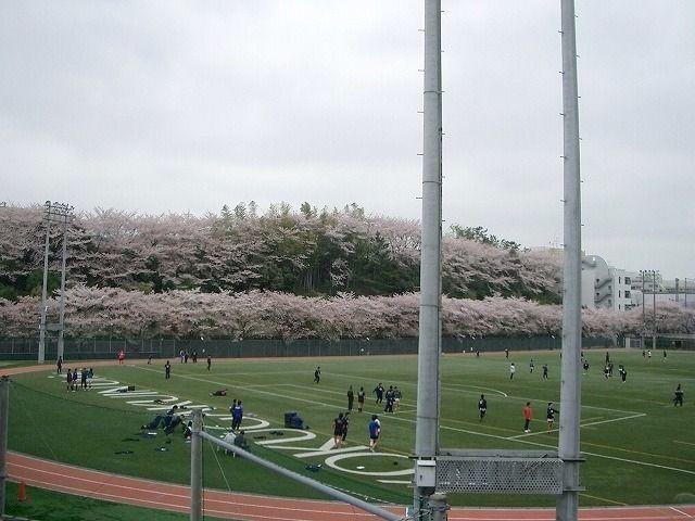 2013年3月31日(日曜日)国学院のグランドの桜です。今朝は、小雨です・・・。予想はしていましたけど・・。昨日、国学院グランドの桜を撮りました。いやぁー、見事なもんです。ダッシュモードの昨日は、3組…