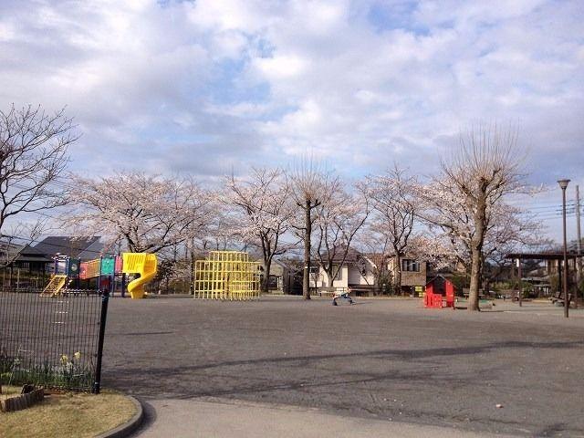 2013年3月26日(火)今朝は、まあまあスッキリとしたお天気です。風は、ぴゅーぴゅー、ちょっと肌寒い。今朝の美しが丘第6公園の桜です。(この記事のブログ№187)