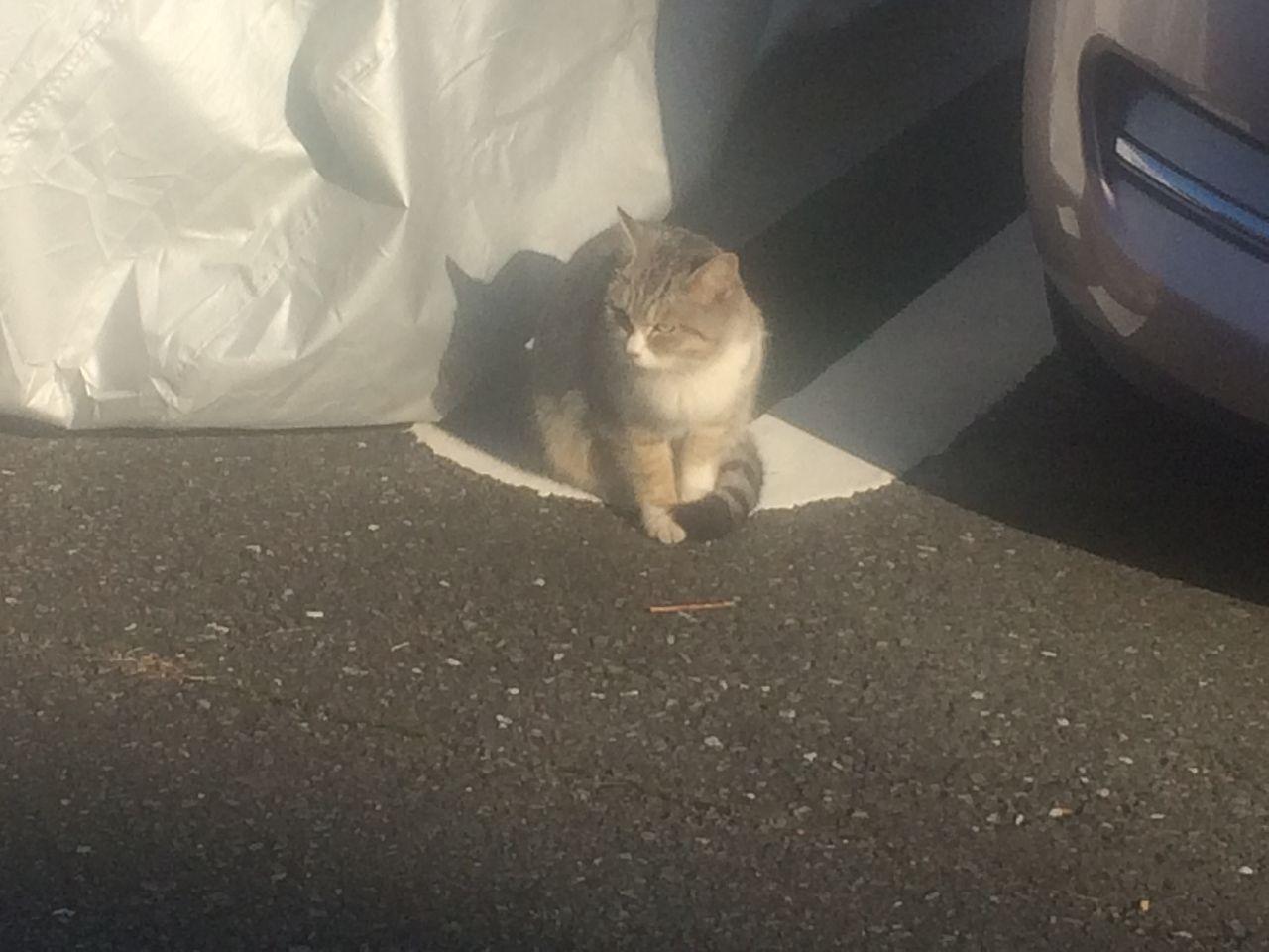 駐車場で見かけた猫