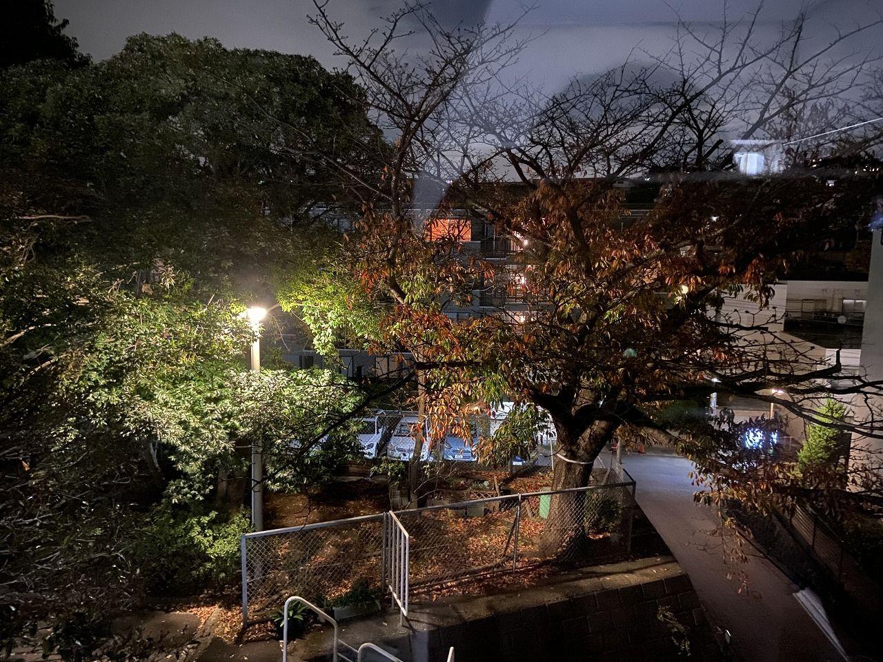 たまプラーザ団地の夜の紅葉の様子