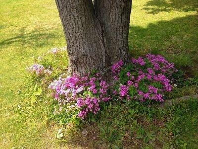 )たまプラーザ団地のちょっとすてきな部分のご紹介!たまプラーザ団地敷地内の樹木の根っこ部分です。
