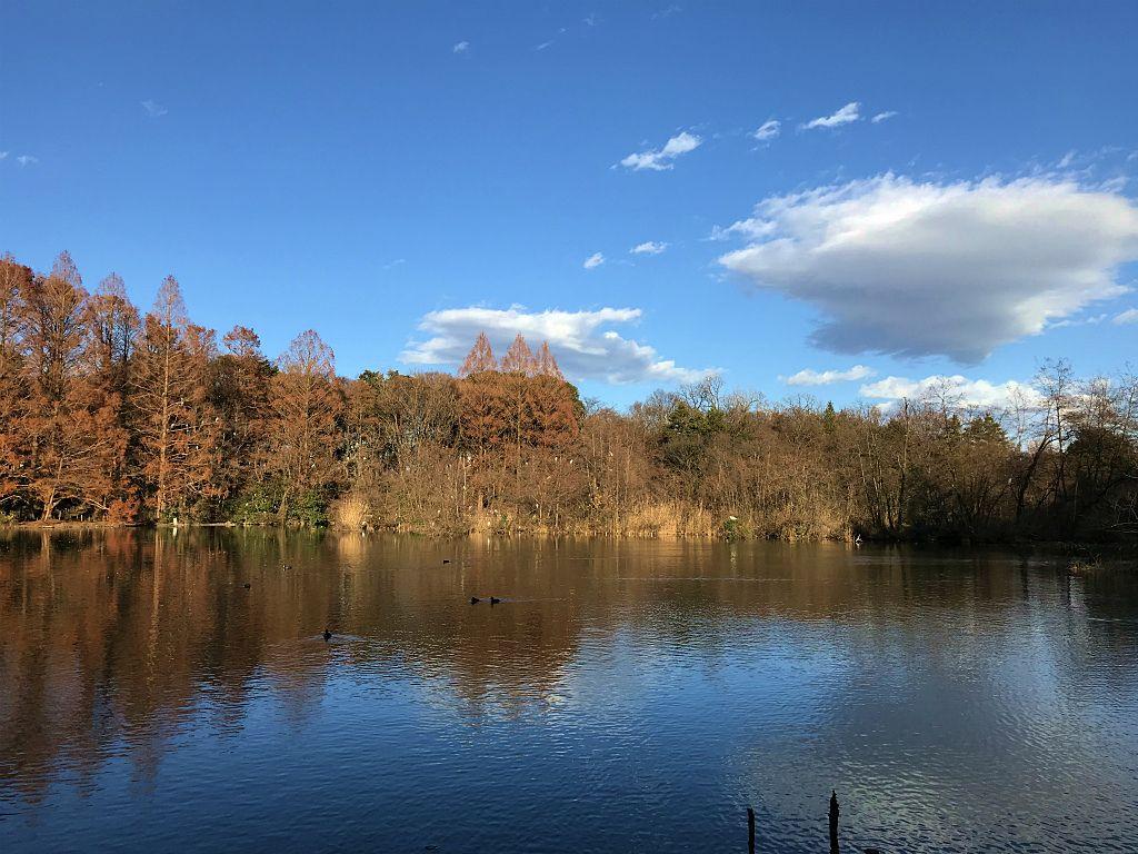 石神井公園の三宝池にて対岸を眺め景色