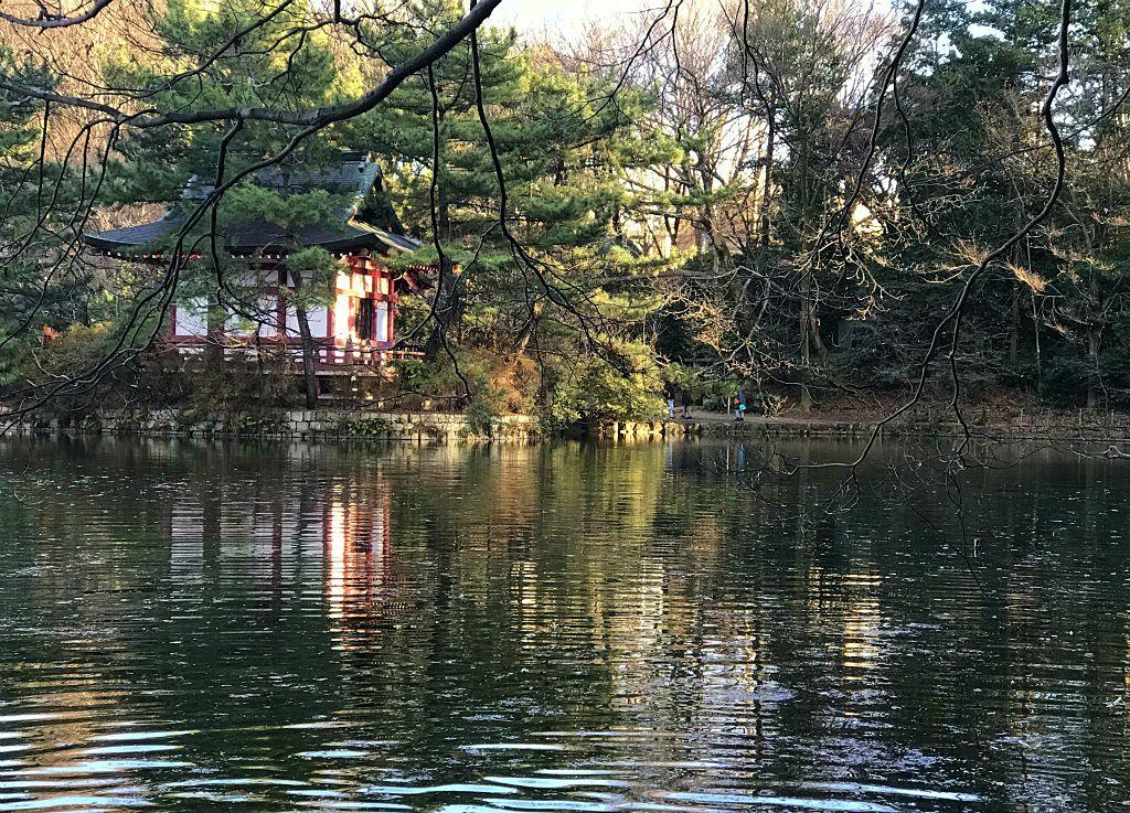 石神井公園の三宝寺池に浮かぶ厳島神社池