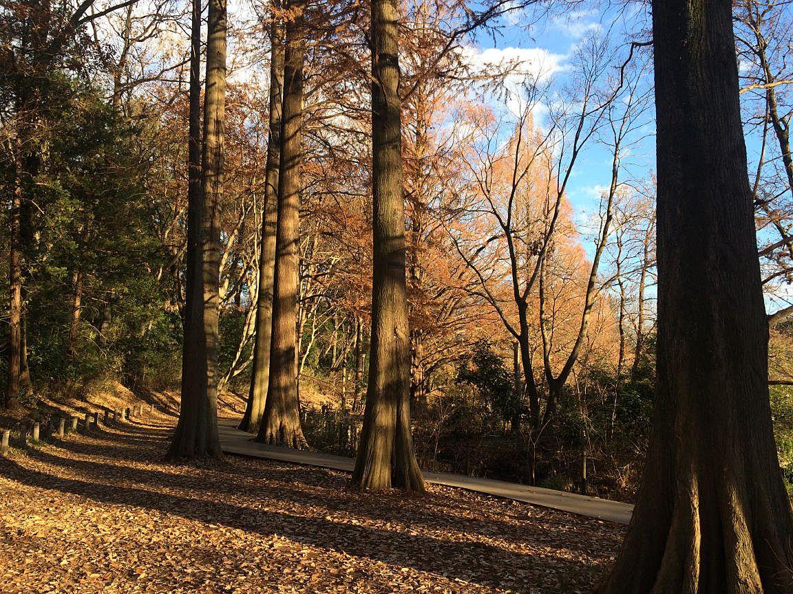 石神井公園の三宝池の周りの散策散歩コース