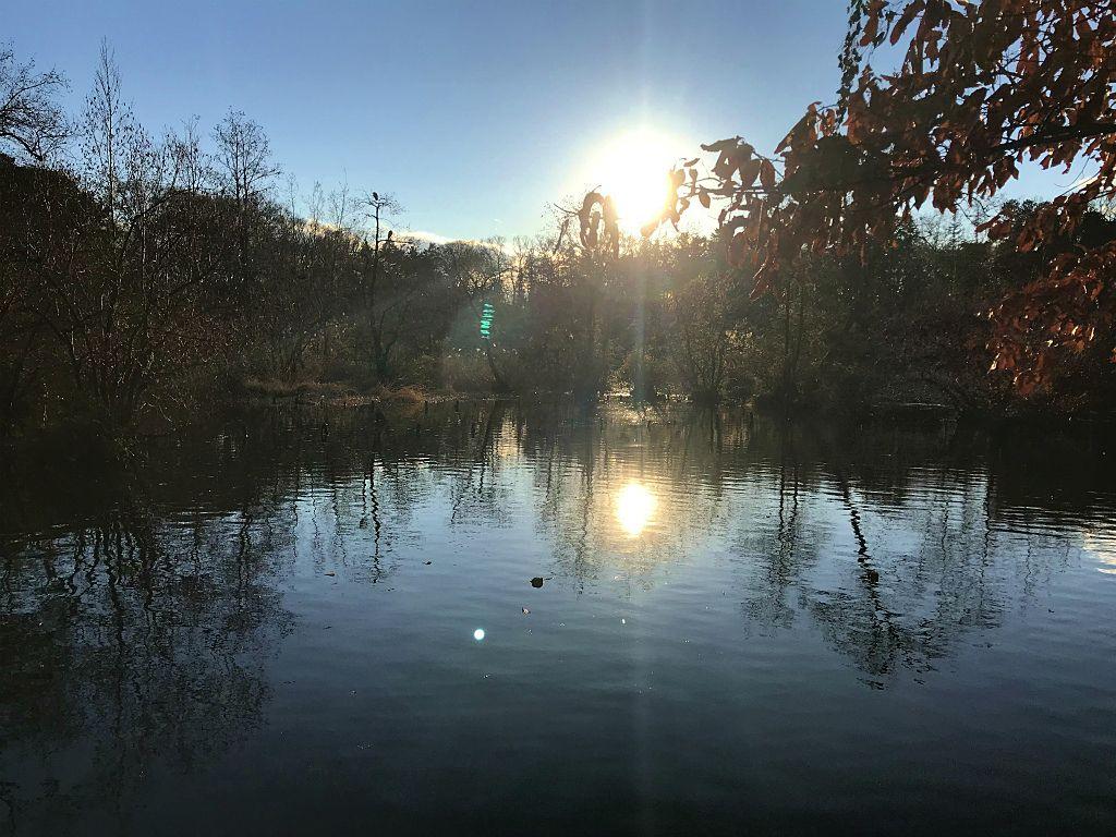 石神井公園の三宝池の周りの神秘的なスポット