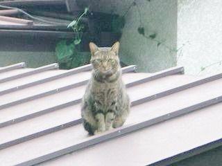 すまし顔のネコ!