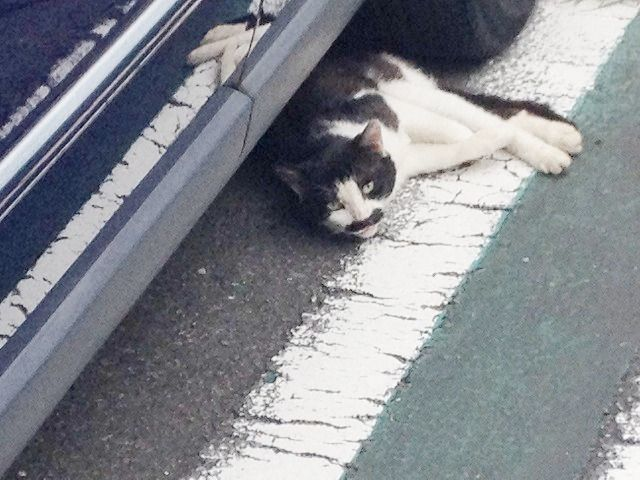 タイヤに挟まれそうな猫