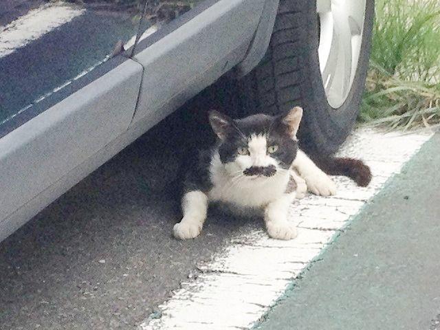車のタイヤに挟まれそうな猫