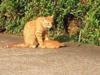お乳をあげているお母さん猫です。