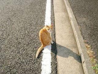 たまプラーザ・あざみ野のネコ