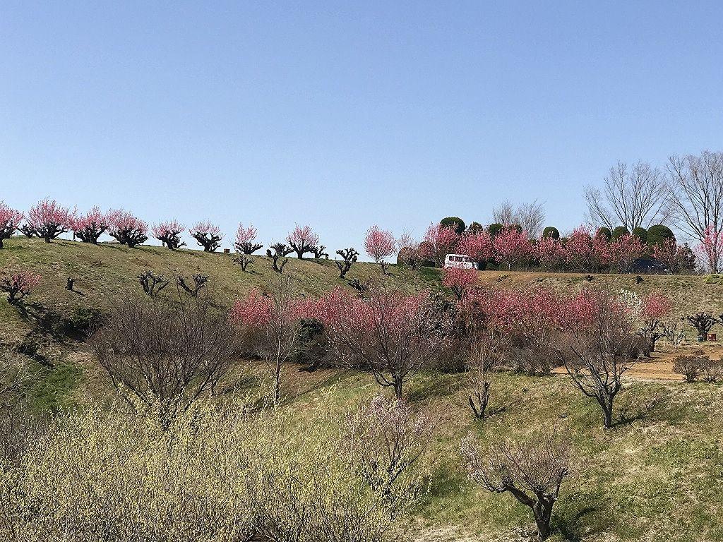 元石川町の花桃の丘