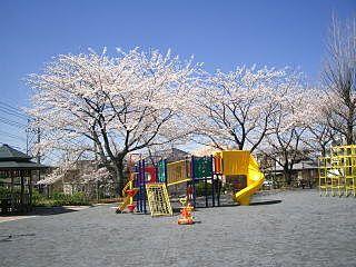 たまプラーザ・美しが丘第6公園の桜です。