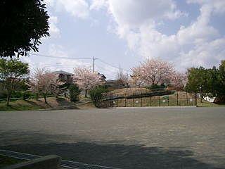 あざみ野の大場富士塚公園の桜