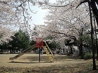 2009年のたまプラーザ・ 新石川日向公園内の桜