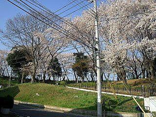 2009年のたまプラーザ・美しが丘第8公園の桜。美しが丘4丁目にて。