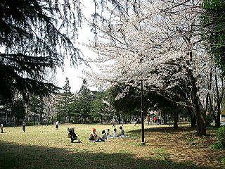 2009年のたまプラーザ・新石川日向公園内の桜
