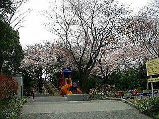 2009年のたまプラーザ・山内公園の桜。美しが丘4丁目にて。