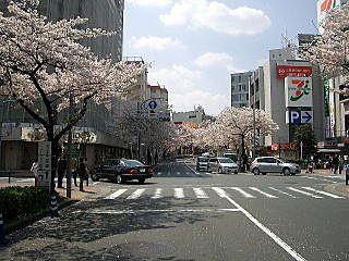 2009年のたまプラーザ駅前の桜