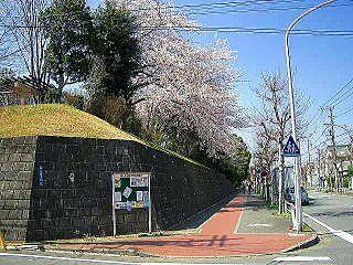 山内公園の桜