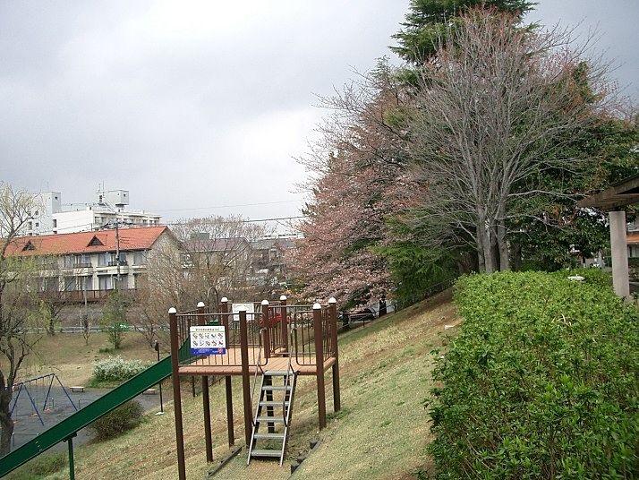 新石川公園の桜
