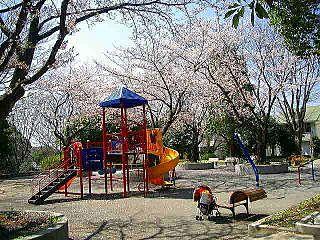 山内公園の遊具場の桜