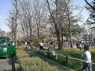 たまプラーザの桜祭り