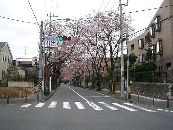 あざみ野の桜通り