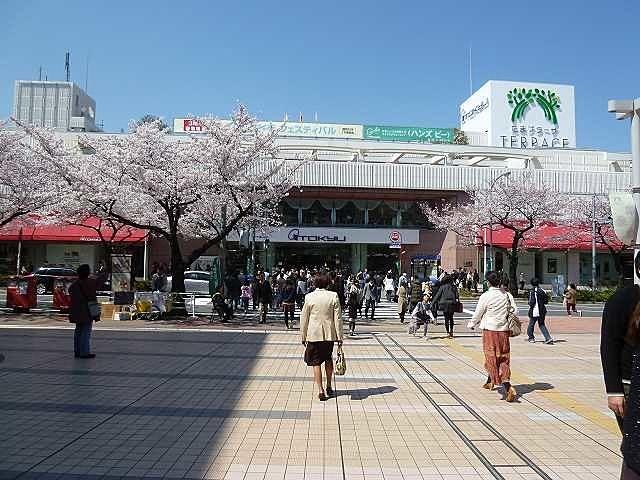 2012年/たまプラーザの桜の様子です。