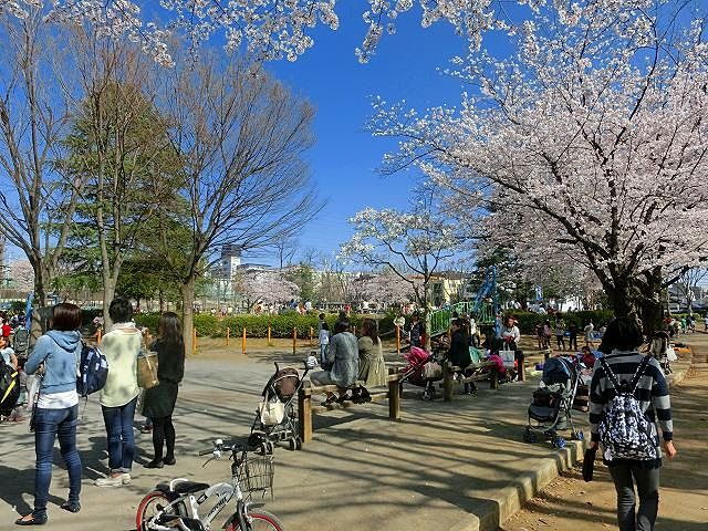 美しが丘公園の桜