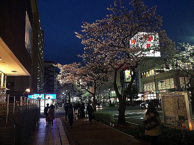 たまプラーザ駅前の夜桜