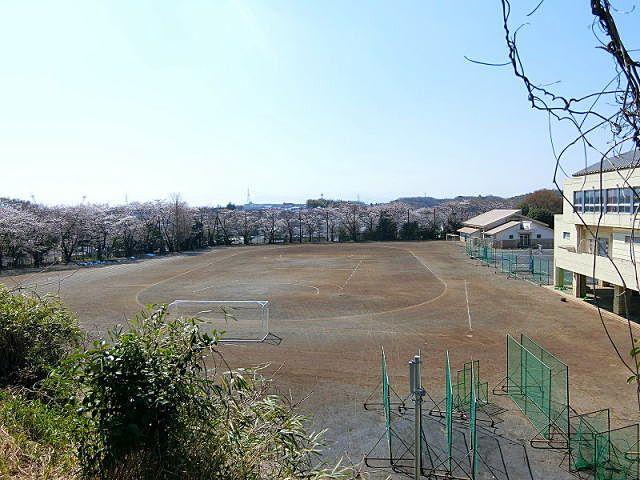 山内中学の桜