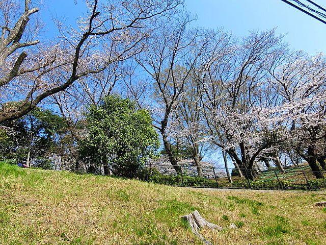 美しが丘第八公園の桜