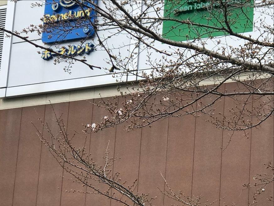 たまプラーザ駅前の桜2019-03-21