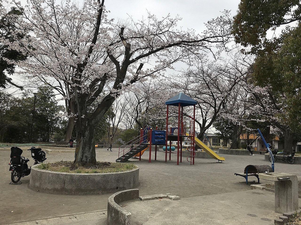 たまプラーザの桜
