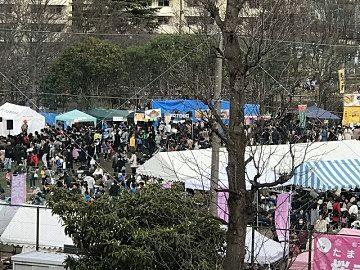 2017年 たまプラーザの桜まつり(たまプラーザ桜フェスティバル)