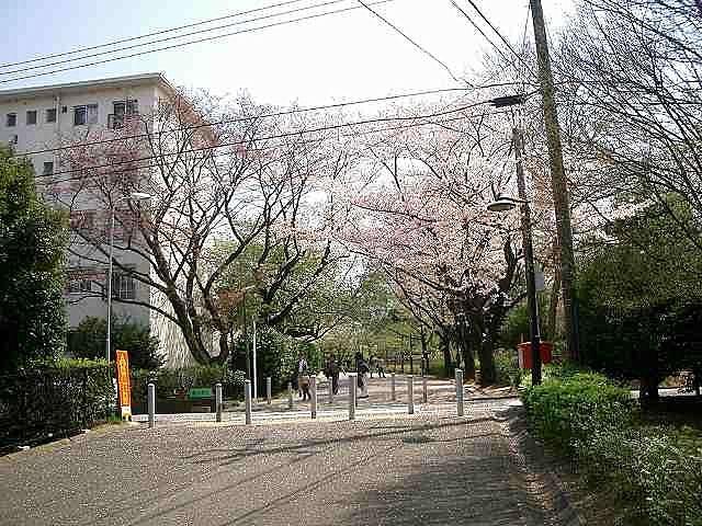 2011年/たまプラーザ団地の桜の様子です。記録日と場所は、2011年4月11日(月)「たまプラーザ団地集会所付近・1街区の桜」