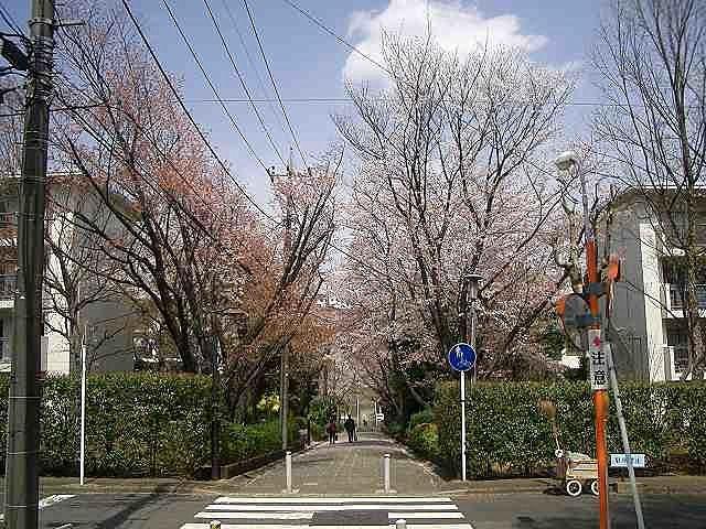 2011年/たまプラーザ団地の桜の様子です。記録日と場所は、2011年4月11日(月)「たまプラーザ団地7街区の桜」