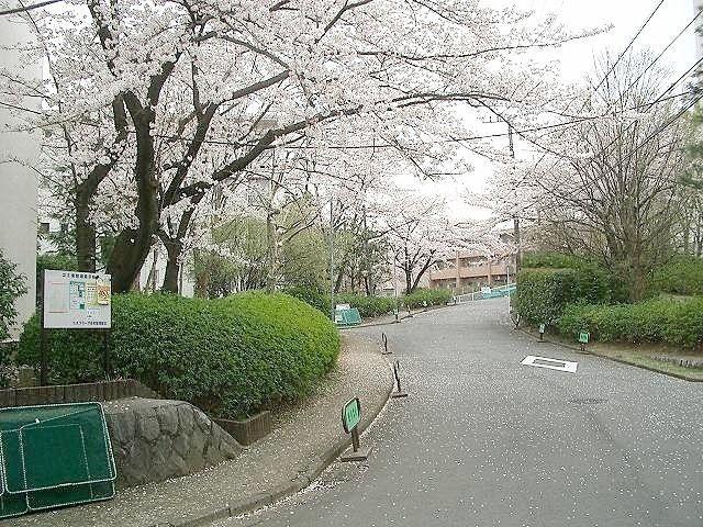 たまプラーザ団地の桜、三街区あたりです