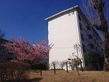 たまプラーザ団地の桜 2014年/たまプラーザ団地の桜の様子です。たまプラーザ団地内は咲きそろっています!記録日と場所は、2014年4月2日(水)「たまプラーザ団地2街区の桜」「たまプラーザ団地2街区・3街区の桜」「たまプラーザ団地3街区の桜」「たまプラーザ団地6街区の桜」「たまプラーザ団地7街区の桜」「たまプラーザ団地から国学院幼稚園方向の桜」2014年4月1日(火)「たまプラーザ団地6-5号棟の桜」2014年3月21日(金)「たまプラーザ団地5号棟周辺の桜」です。
