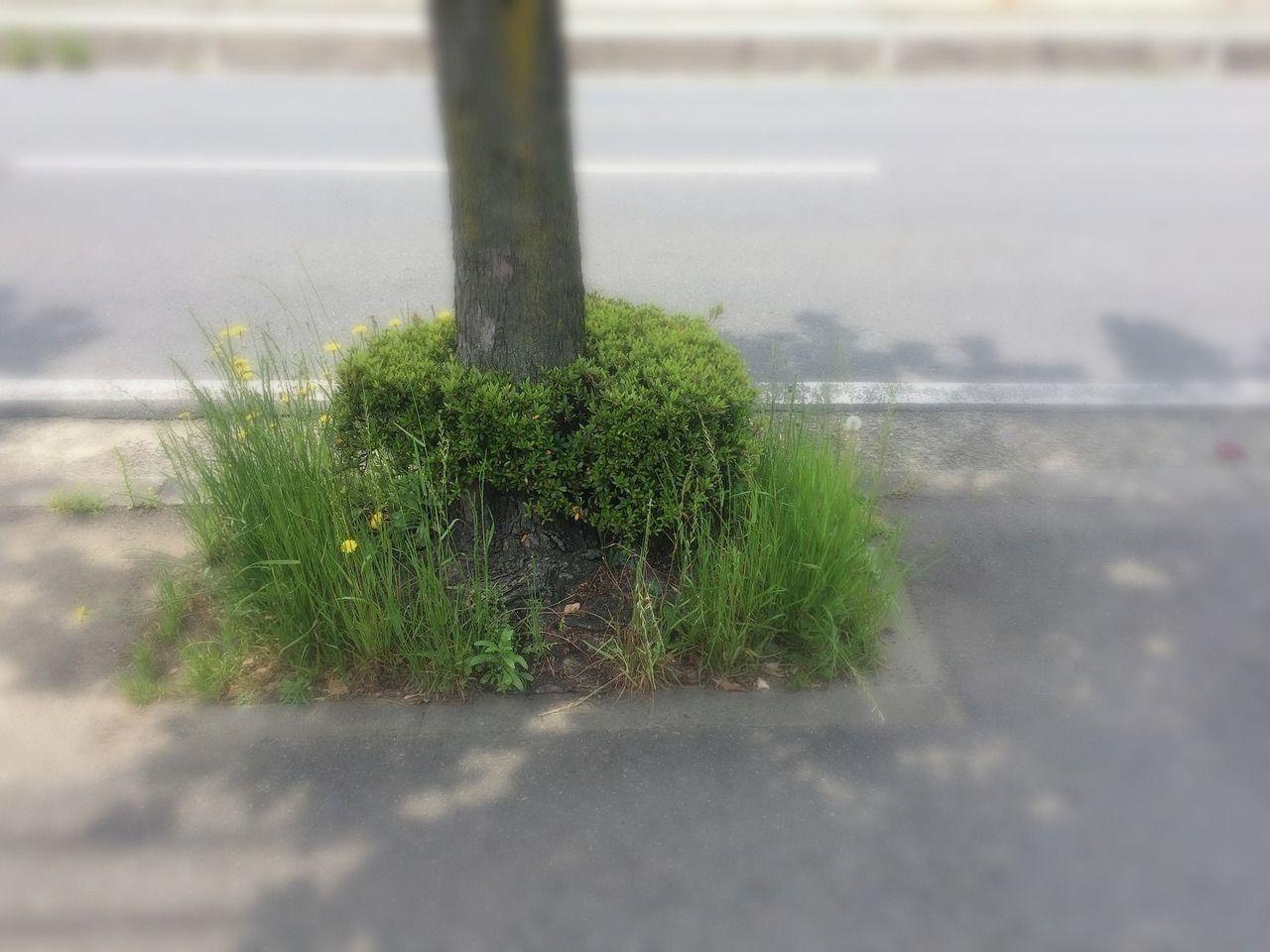歩道の植え込み