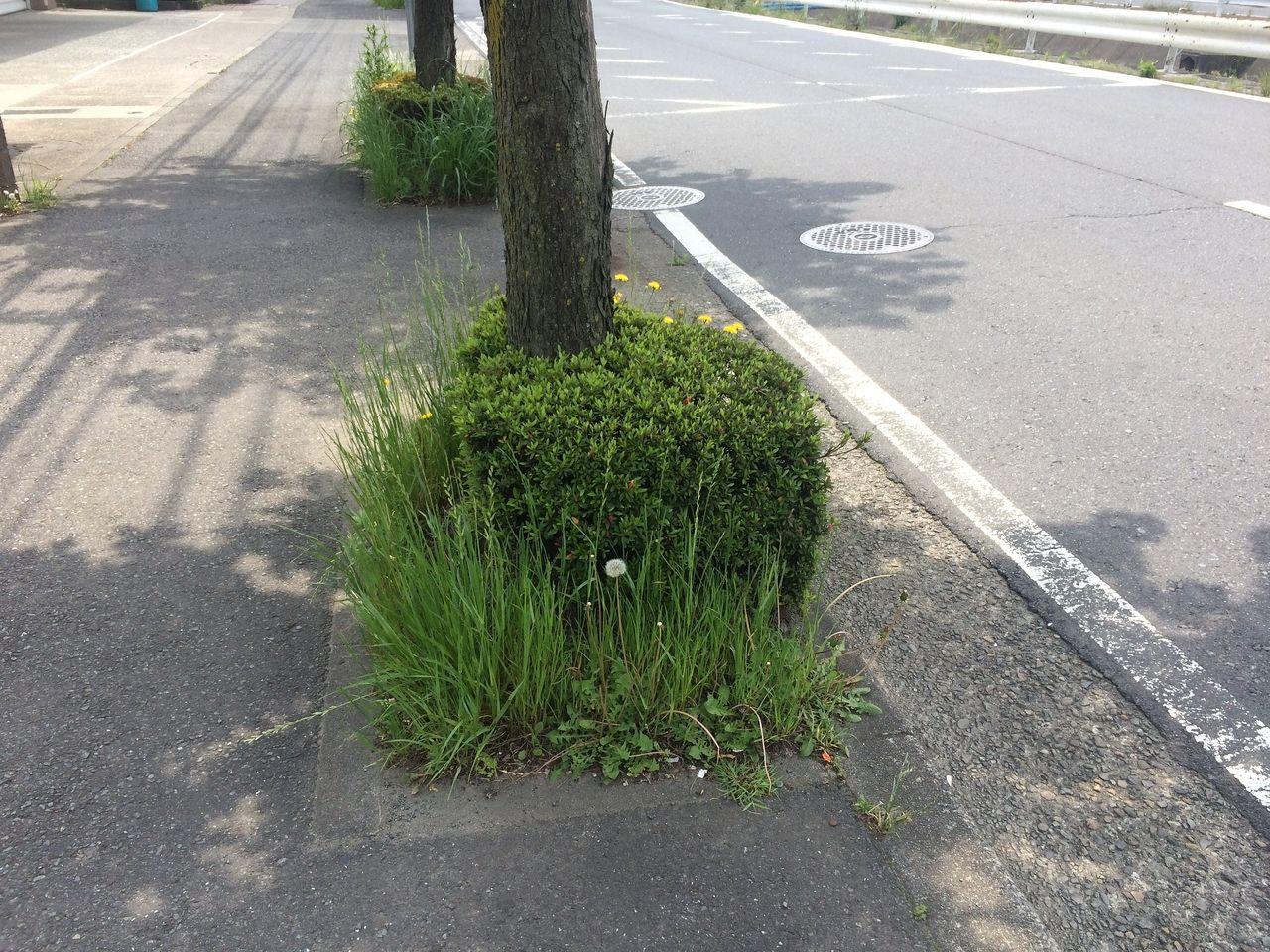雑草の背が高くなって見通しが悪くなってしまいます。