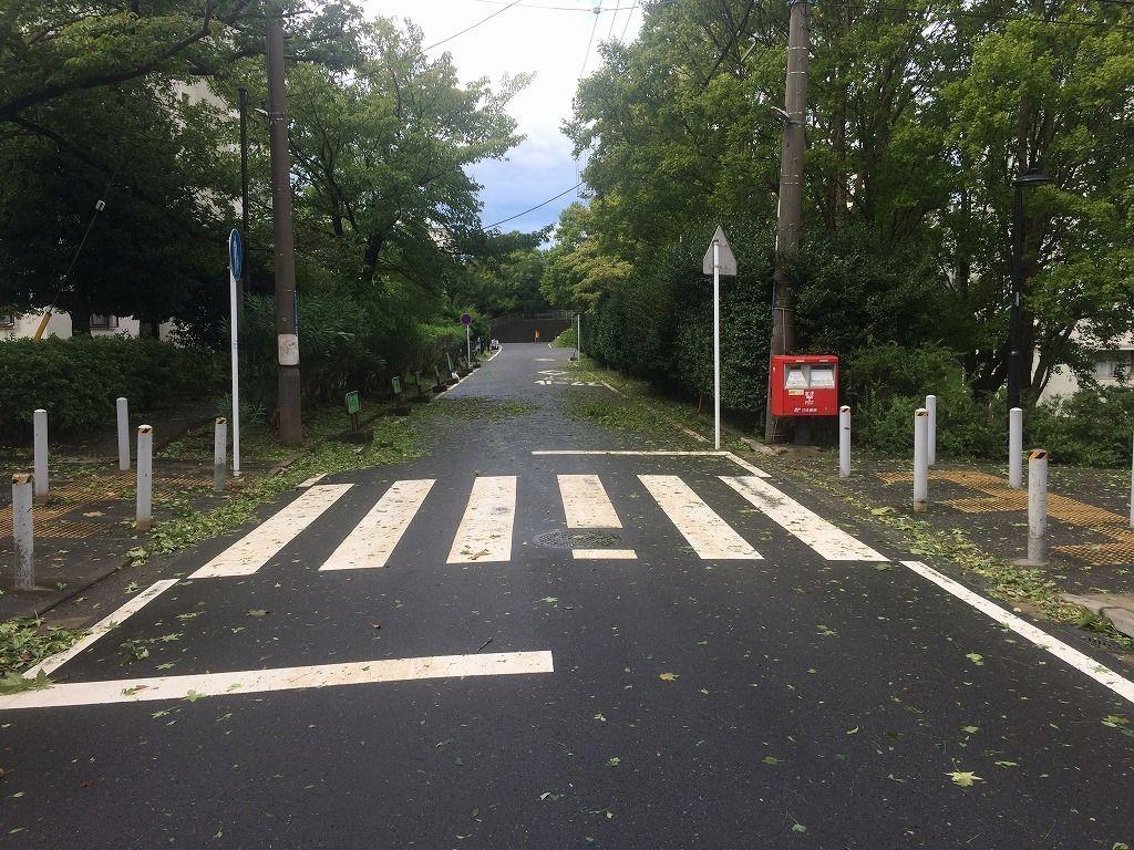 台風/たまプラーザ団地