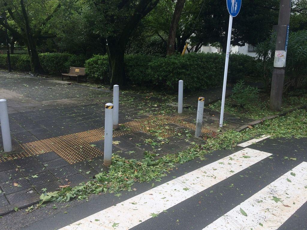 台風通過後のたまプラーザ団地の散乱した枝
