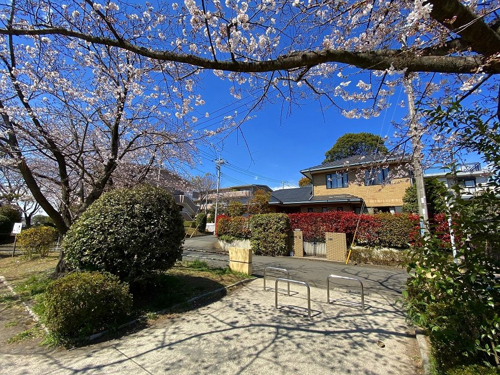 2020年3/24(火)たまプラーザの新石川日向公園の桜の様子です。
