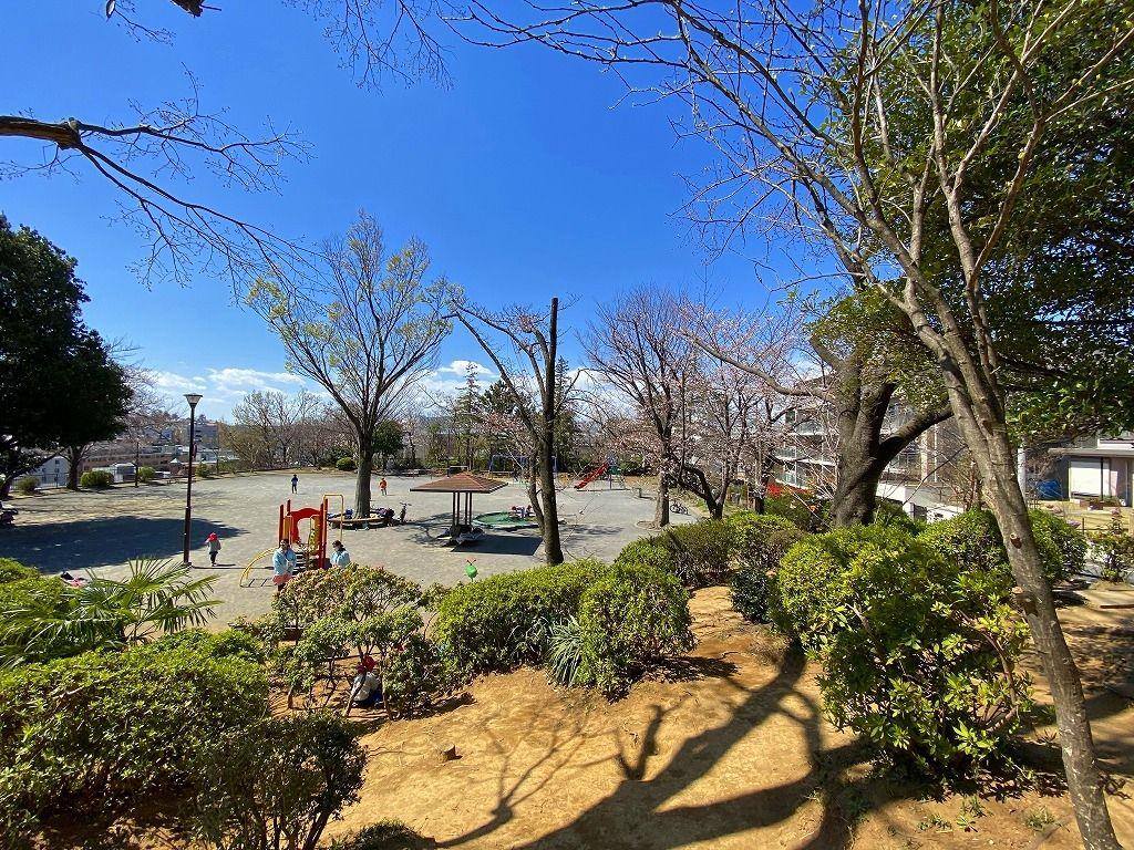 2020年3/24(火)たまプラーザの美しが丘第5公園の桜の様子