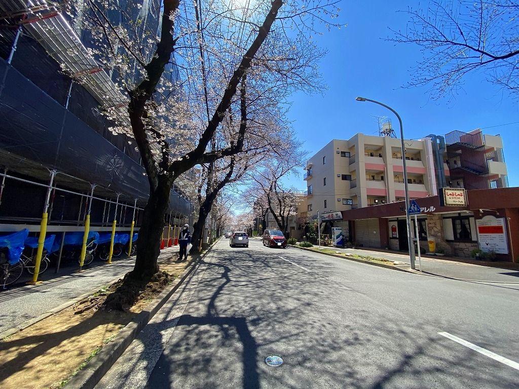 2020年3/24(火)たまプラーザ桜通りの様子