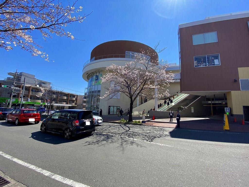 2020年3/24(火)たまプラーザの駅前通りの桜の様子です。
