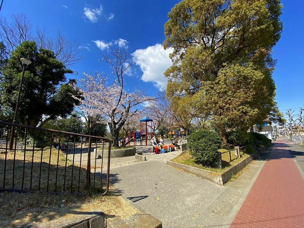2020年3/24(火)たまプラーザの山内公園の桜の様子です。