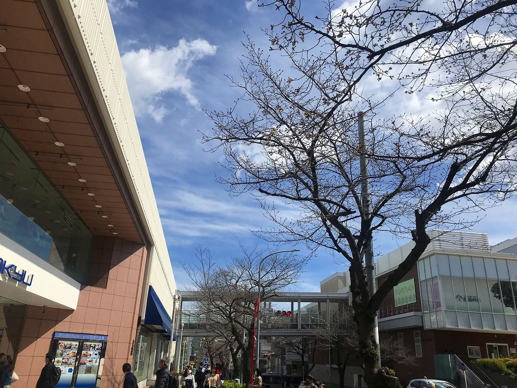 2020年/たまプラーザの桜